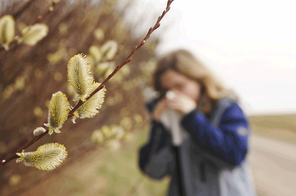 Haaatschi! Pollen im Anflug